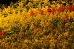 Autumn Brushwork Stock Image