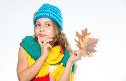 Autumn bucket list for children. Girl cute face wear knitted autumn hat and scarf hold leaves white background. Autumn. Leisure idea. Girl with maple leaf think stock images