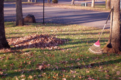 Autumn Buisness Stock Image