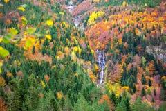 Autumn Bujaruelo Ordesa som är waterfal i den färgrika nedgångskogen Huesca Royaltyfri Foto