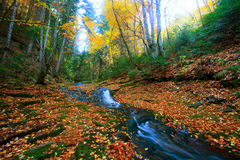 Autumn bulgarian forest Royalty Free Stock Photos