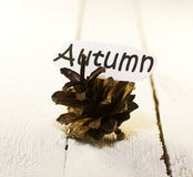Autumn bump. Pine cone from the tree, symbol of autumn Royalty Free Stock Photography