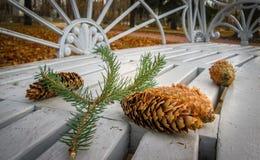 Autumn Bump Royaltyfria Foton
