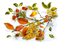 Autumn bunch Royalty Free Stock Photo