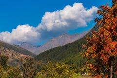 Autumn view in Burgusio, Trentino-Alto Adige, Italy. Autumn in Burgusio - Vinschgau, Italy royalty free stock photos