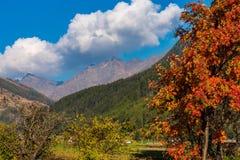 Autumn view in Burgusio, Trentino-Alto Adige, Italy. Autumn in Burgusio - Vinschgau, Italy royalty free stock images