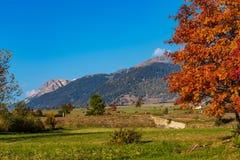 Autumn view in Burgusio, Trentino-Alto Adige, Italy. Autumn in Burgusio - Vinschgau, Italy stock photography