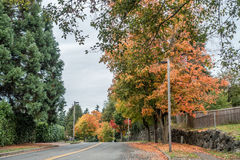 Autumn In Burien. Radiant fall colors burst forth from trees lining a street in Burien, Washington royalty free stock images