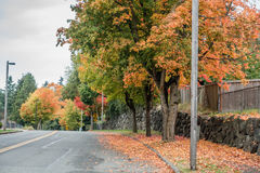 Autumn In Burien 6. Radiant fall colors burst forth from trees lining a street in Burien, Washington royalty free stock photography