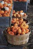 Autumn Bushel Baskets met minipompoenen wordt gevuld die royalty-vrije stock foto