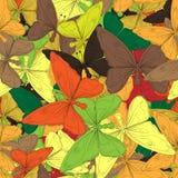 Autumn butterflies Stock Images