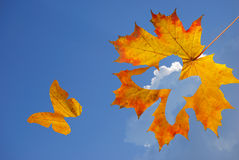 Autumn butterfly stock photography