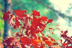 autumn buty deszczowej podlegających gumowego parasolkę Zdjęcie Royalty Free