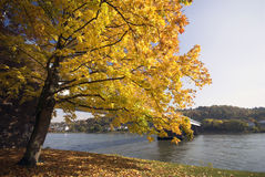 Autumn By The Rhine Stock Photography