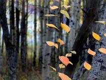 Autumn Calgary Alberta (16) Royalty Free Stock Photos