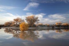 Autumn in California. Stock Images