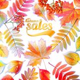 Autumn Calligraphy sale on detailed leafs. Royalty Free Stock Photo