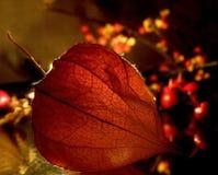 Autumn& x27; calore di s Immagini Stock Libere da Diritti