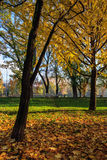 Autumn came with yellow leaves Royalty Free Stock Image