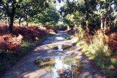 Autumn camino Stock Photography
