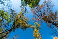 Autumn canopy Royalty Free Stock Image