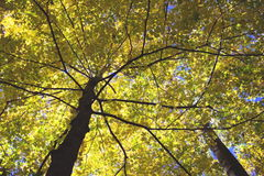 Autumn Canopy. Photo of autumnal trees at Big Hunting Creek in the state of Maryland Stock Photo