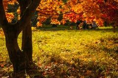Autumn Canopy Immagini Stock