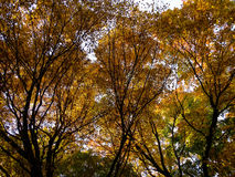 Autumn Canopy Royalty Free Stock Photos