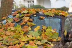 Autumn_car foto de stock