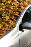 Autumn Car Royaltyfri Bild