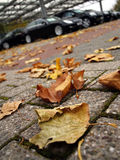 Autumn in the car dealership Stock Photos