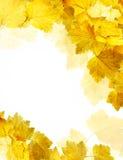 Autumn card Royalty Free Stock Photo