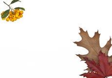 Autumn Card stockbild