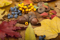 Autumn Card Fotografia Stock Libera da Diritti