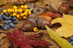 Autumn Card Immagine Stock Libera da Diritti