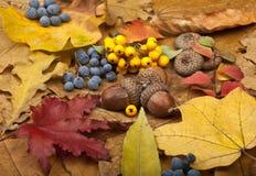 Autumn Card Lizenzfreie Stockfotografie