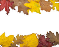 Autumn Card Fotografie Stock
