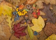 Autumn Card Fotografie Stock Libere da Diritti