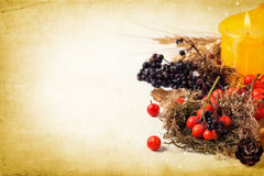 Autumn card with berries Royalty Free Stock Photo
