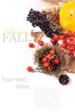 Autumn card with berries Royalty Free Stock Photos