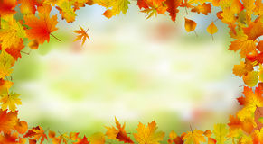 Autumn card of bright multicolor leaves. Royalty Free Stock Photo