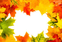 Autumn card of colored leafs Stock Images