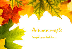 Autumn card of colored leafs Royalty Free Stock Photos