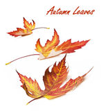 Autumn card of colored leafs.  Royalty Free Stock Photo