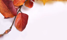 Autumn card of colored leafs frame over white back Royalty Free Stock Images