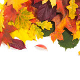 Autumn card of colored leafs Royalty Free Stock Image