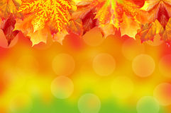 Autumn card of colored leaves over nature with copy space for yo Stock Photography