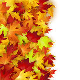 Autumn card, colorful leaves frame, background, template Stock Image