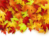 Autumn card, colorful leaves frame, background, template Royalty Free Stock Photos