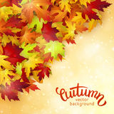 Autumn card, colorful leaves and handwritten lettering, background, template, illustration Stock Image